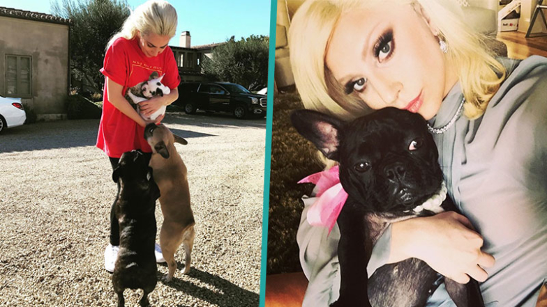 Lady Gaga's Unbreakable Bond With Her Beloved French Bulldogs